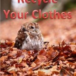 Autumn Is Coming! Autumn Tips!
